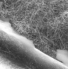 Изображение под микроскопом